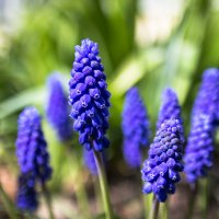 Цветы :: Евгений Котейко