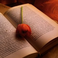 красный тюльпан :: Татьяна Киселева