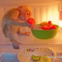 Обезьянка Коко в холодильнике :: Наталья Краснюк