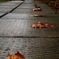 Осень наступает/по следам осени :: Аделя Закирова