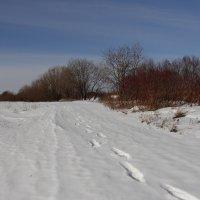 Следы на снегу. :: Андрей Дурапов