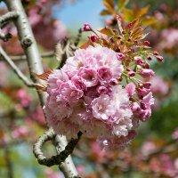 Весна.... :: Павел Катков