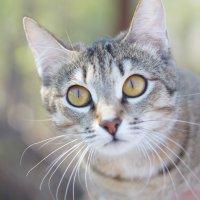 Cat :: Анастасия Томилова