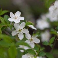 Мои первые цветочки :: Евгения О