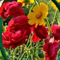 Мои 6 соток (Цветы) :: Viacheslav