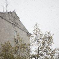 Майский снегопад. :: Владимир  Зотов