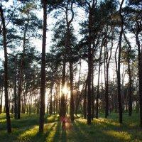 Душа леса :: Алексей Гончаров