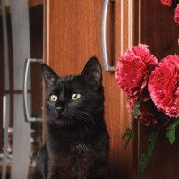 Еще кошка :: Руслан