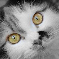 кошка :: Кристина Рубанова