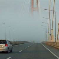 едем в туман :: Ольга Киселева