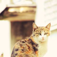 Дворовая кошка 2 :: Екатерина Аматова