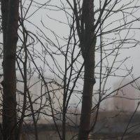 Туман.....После дождя :: Cветёлка ***