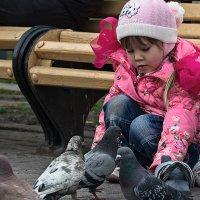 голуби :: Андрей Пашков