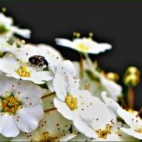 Кажется, что жизнь обыкновенна, но краса даруется весной :: Ольга Ламзина