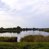 река Ея утром :: Светлана Скирта