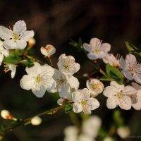 Весна, весна... :: Ирина Терентьева