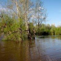 Весеннее наводнение :: Ольга Иргит