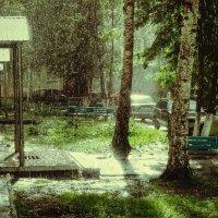Летний дождь. :: Александр Ломов