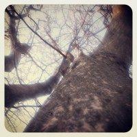 Дерево..... :: Роман Весельський