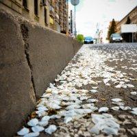 весенний снег :: Олеся Семенова