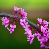 Весна... :: Ксения Заводчикова
