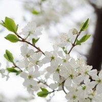 Весна :: Ольга Савотина