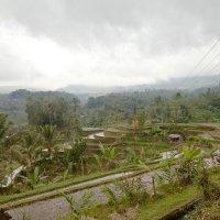 Рисовые плантации на Бали :: Tatiana Willemstein