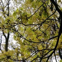 Весна :: navalon M