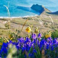 Полевые цветы и море :: Глеб Буй
