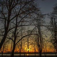Деревья на закате :: Богдан Петренко