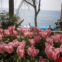 Кусочек Весны... :: Владимир Старовойтов
