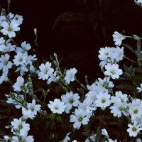 Весна :: Виктория Гончаренко
