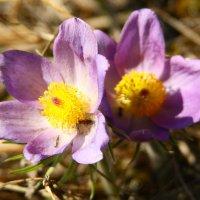 почти аленький цветочек :: евгений Смоленцев