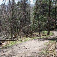 весенний лес :: Нина
