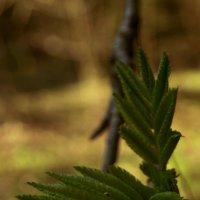 Природа :: Елисей Львов