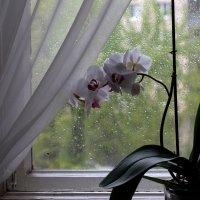 Дождик. :: ФотоЛюбка *