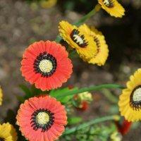 Штучні квіти :: Богдан Купчак