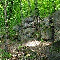 и на камнях растут деревья.. :: юрий иванов
