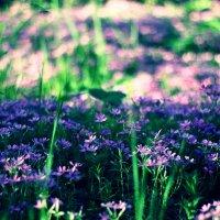 весна :: Irsen S