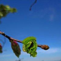 Весна идет, весне дорогу! :: Павел Зюзин