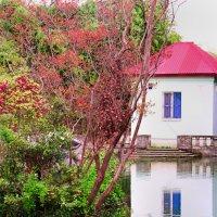 Лебединое озеро :: HelenaZ Z