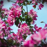 розовая мелодия :: Эльмира Суворова