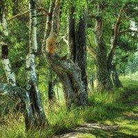 Утро в лесу. :: Андрей Вычегодский