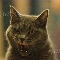 Если Вы думаете, что я добрый кот, Вы ошибаетесь, муррр...) :: Kathy Bespalova