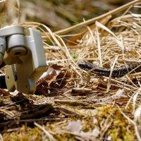 Фотограф! Будь бдителен в лесу! ;) :: Александр Максимов