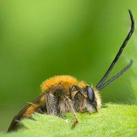 Утро, пчелка, сладкий сон... :: Александр Земляной