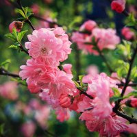 Цветет великолепно :: Boris Khershberg