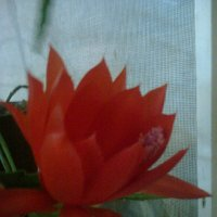 Красная звезда :: Натали Жоля