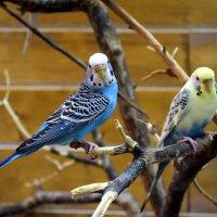 Птицы в контактном зоопарке :: Наиль Байков