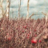 Весенний шиповник :: Сергей Смирнов